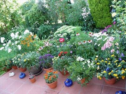 unser garten im august 2008. Black Bedroom Furniture Sets. Home Design Ideas
